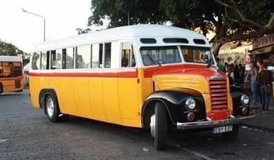 Maltese - Vintage-bus