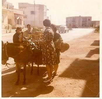 Donkey Deliveries in Malta